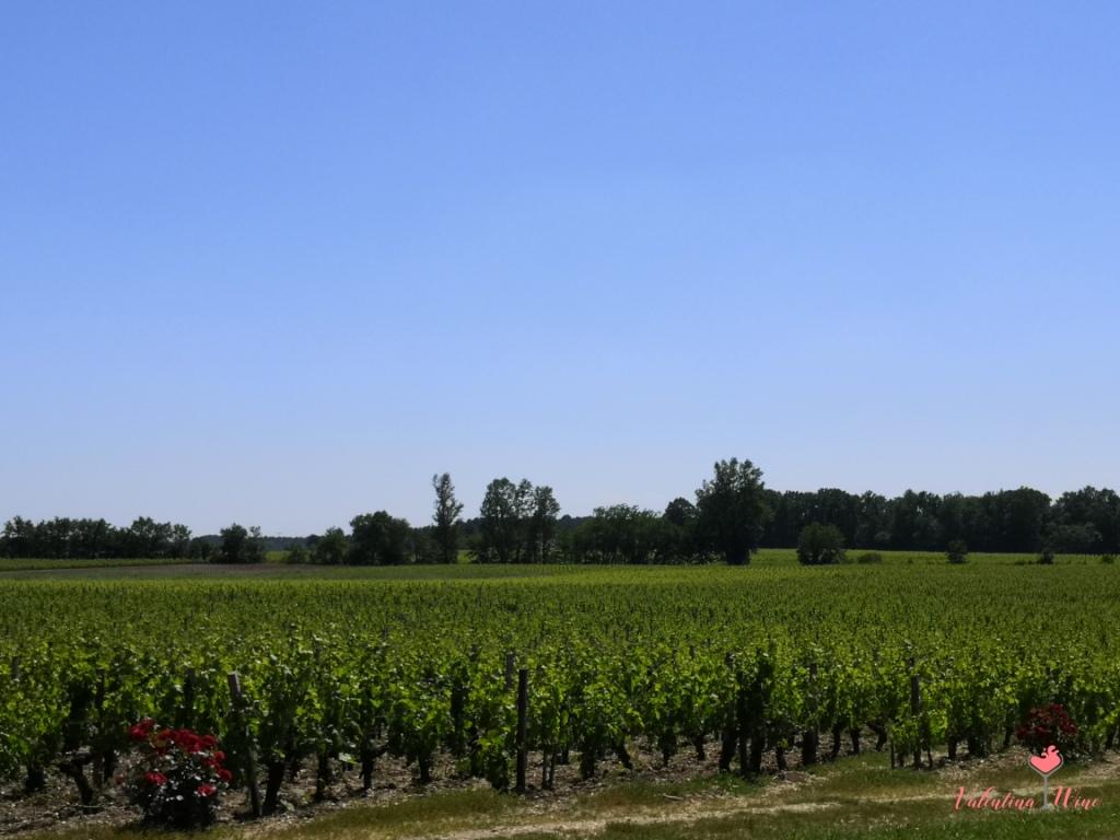 Винодельческий регион Бордо