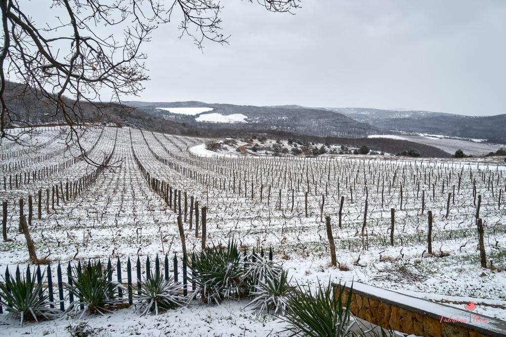 Утренние виноградники Uppa Winery, покрытые мартовским снегом