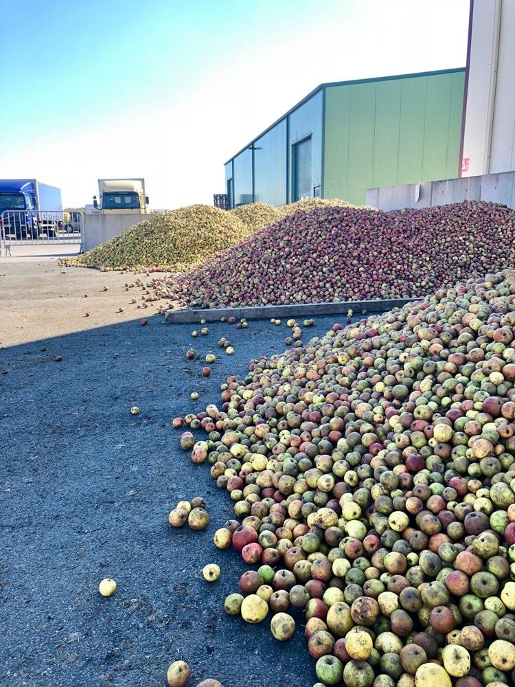 Разные сорта яблок сортируются отдельно