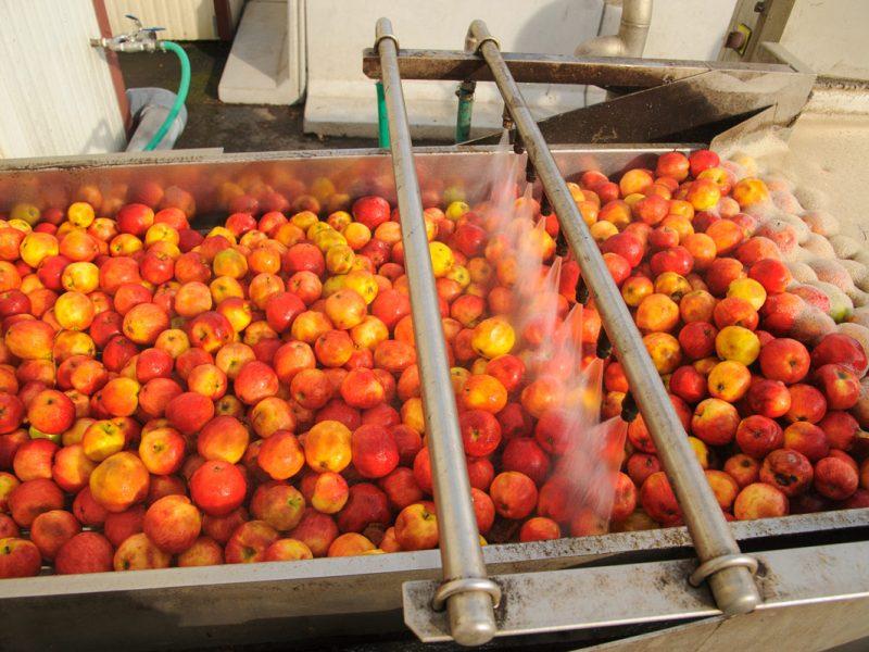 Мытьё плодов