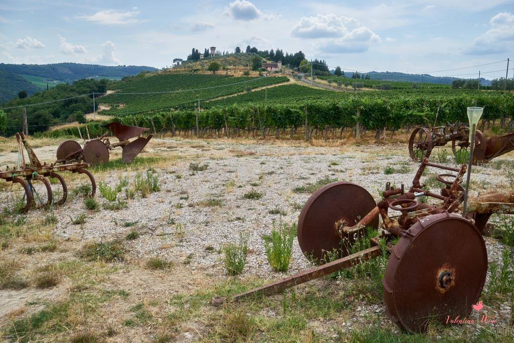 Виноградники Castello Vicciomaggio