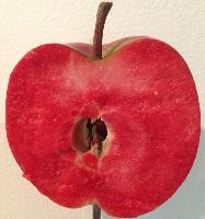 Сорт с красной мякотью Red merylinn