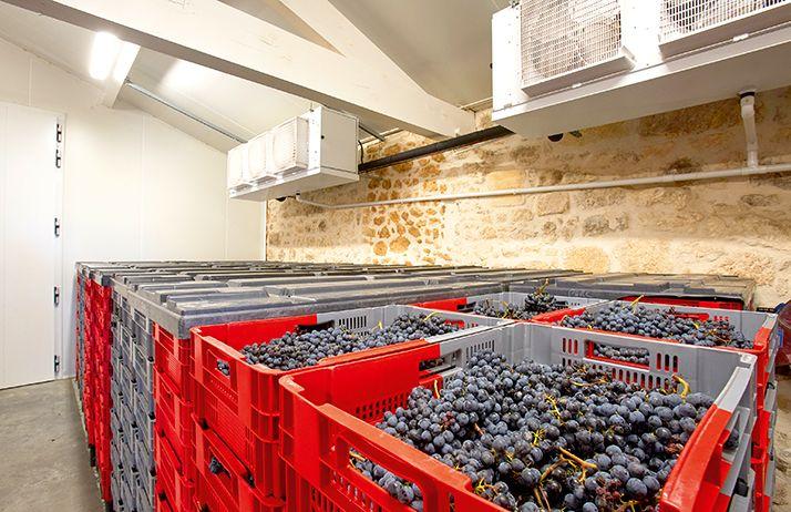 Собранный виноград в специальном помещении с контролируемой температурой
