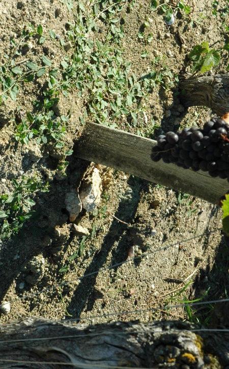 soil -Francs Cotes de Bordeaux