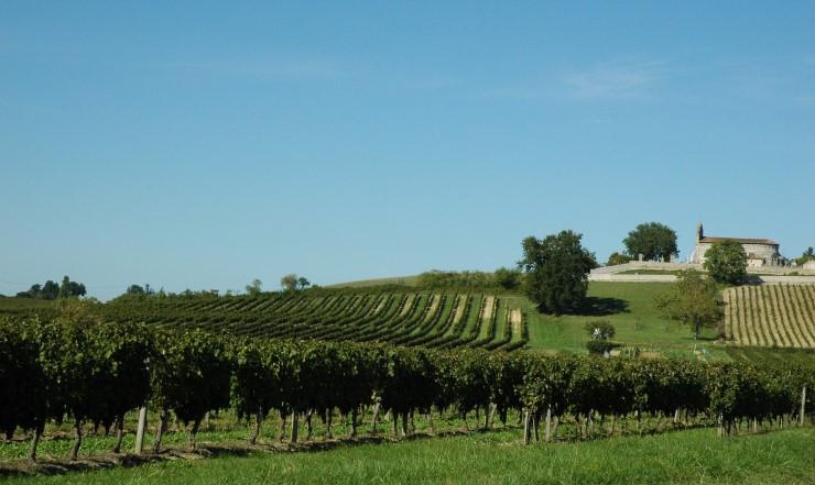 vineyard Francs Cotes de Bordeaux
