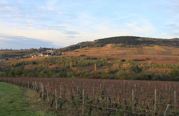 Виноградник в регионе Бургундия