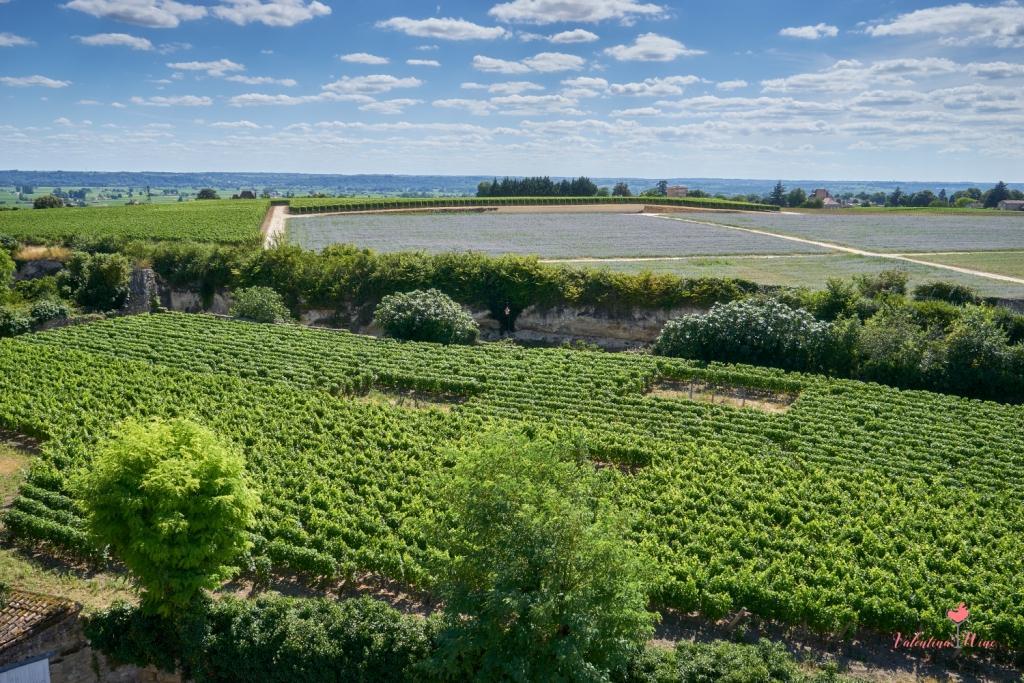 Вид виноградников Бордо