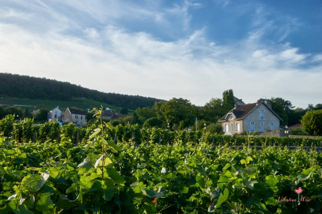 Виноградники Бургундии фото 2