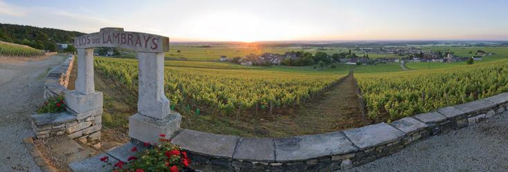 Виноградник Кло де Вужо