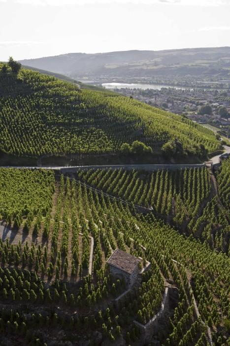 Виноградники Долины Роны