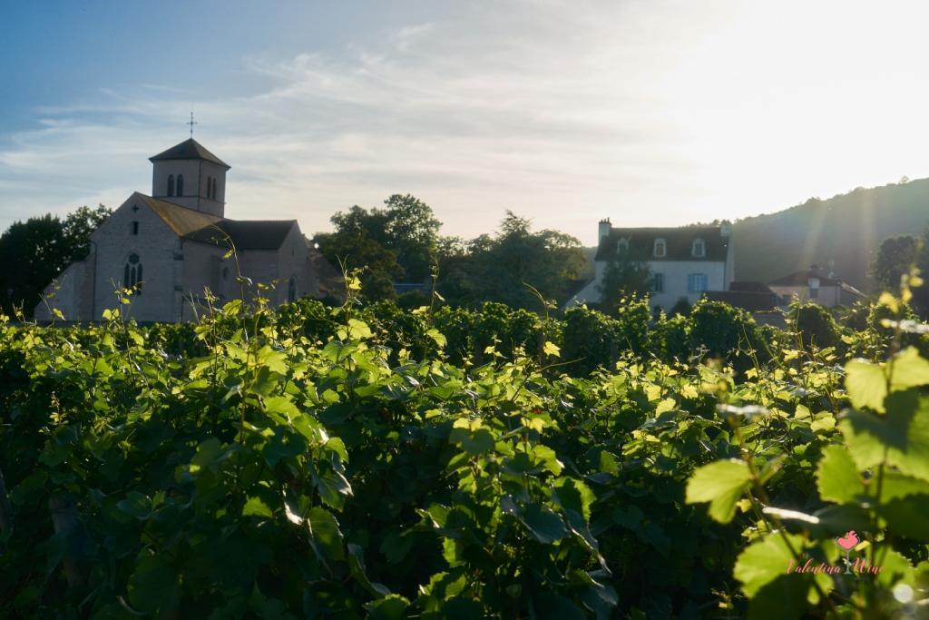 Виноградники Бургундии фото 4