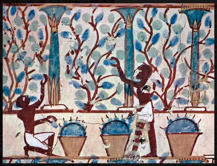 Сбор винограда Египет