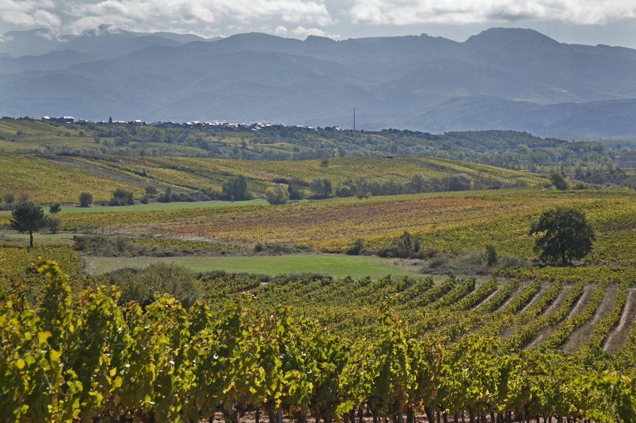 Виноградники Бьерзо