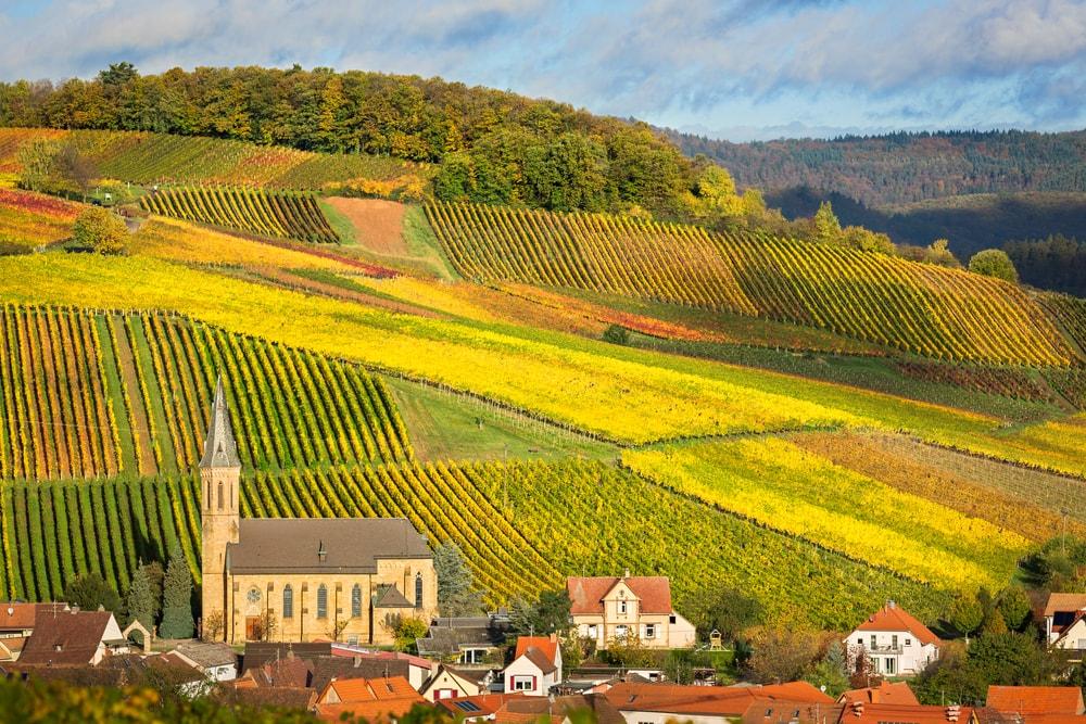 Виноградники региона Пфальц