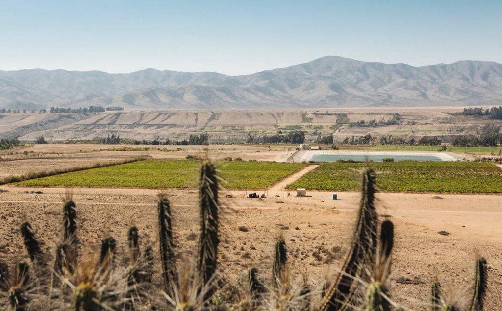 Виноградники в пустыне Атакама