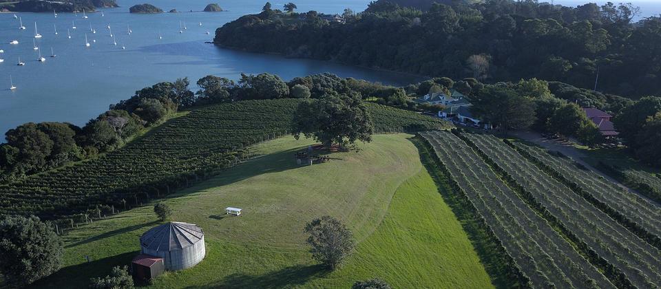 Виноградники на острове Уаихеке