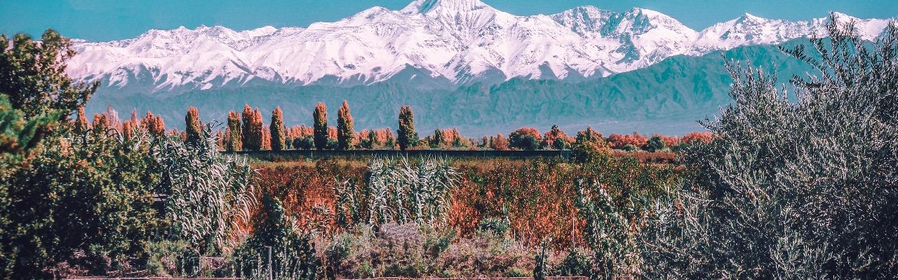 Виноградники Долины Маипу
