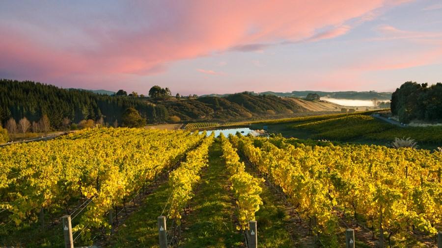 Виноградники Нельсон в Новой Зеландии