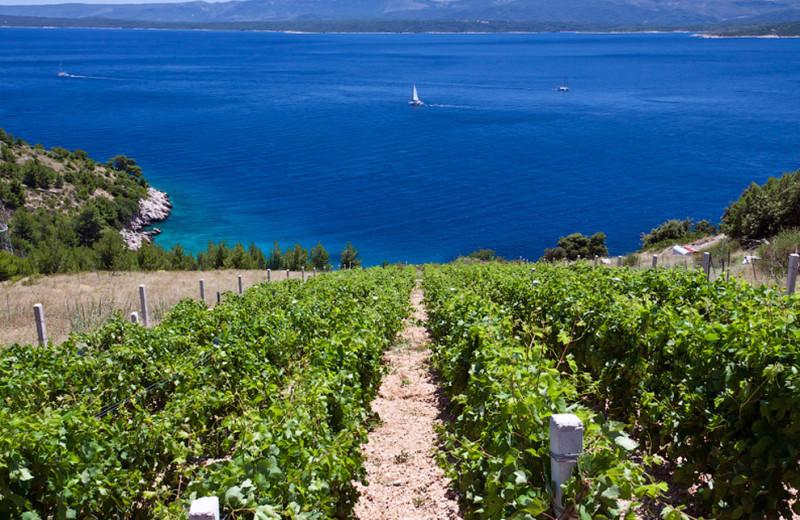 Виноградники Южной Далматии