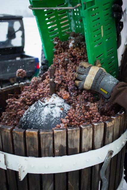 Прессование замороженного винограда