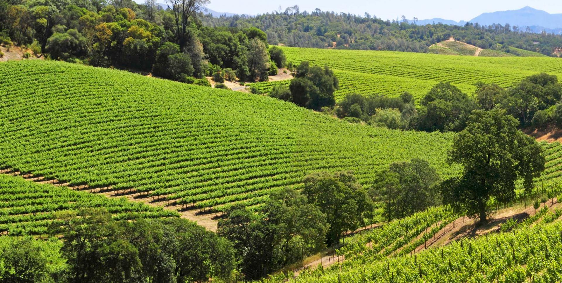 Виноградники Dry Creek Valley