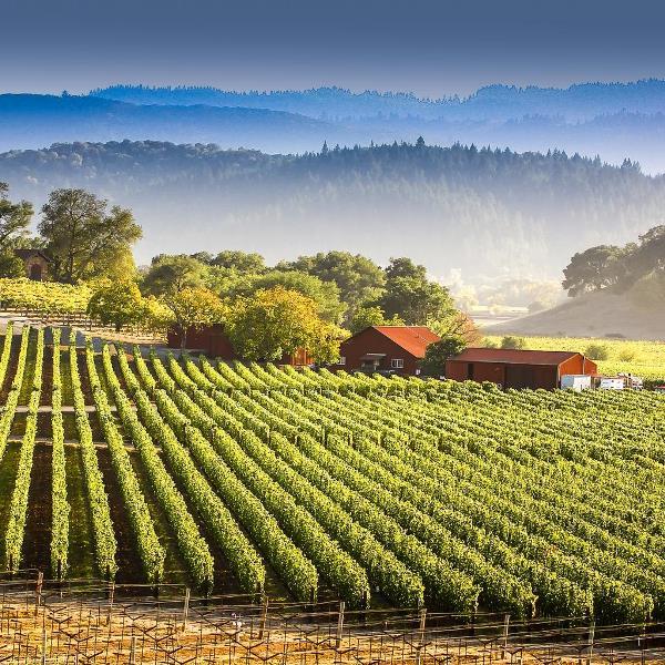 Виноградники Долины Напа США