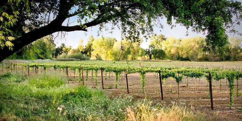 Виноградники Лодай