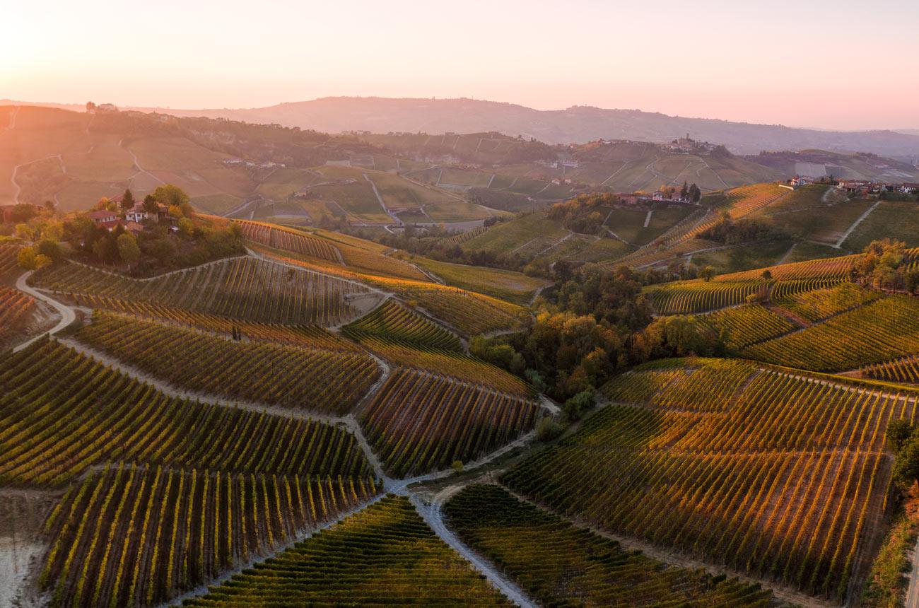 Виноградники Бароло